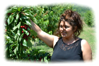 Greek farmer from Panagitsa befor the collecting of cherries