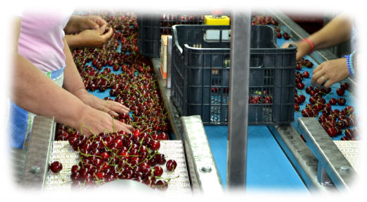 Cherry for loading